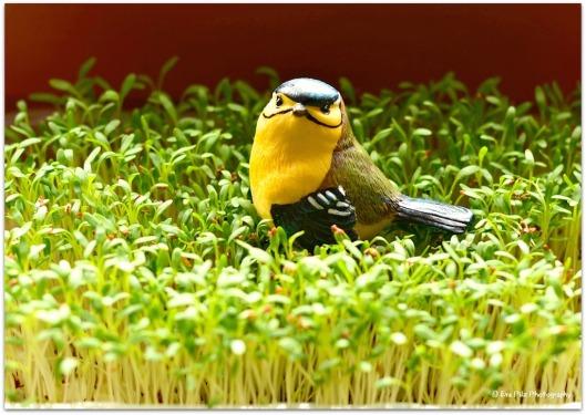 Kresse mit Vogel