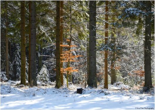 Märchenwald im März