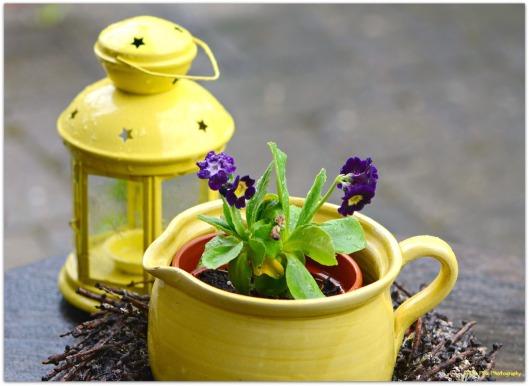 Gartenimpression in gelb.jpg
