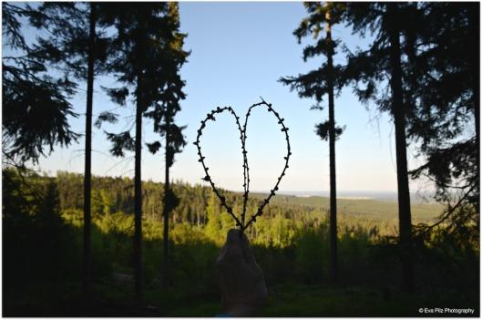Herz aus Lärchenzweig
