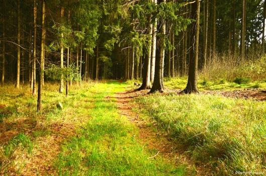 Waldweg14.jpg