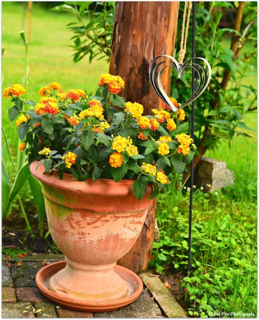 Blumenstock mit Herz1