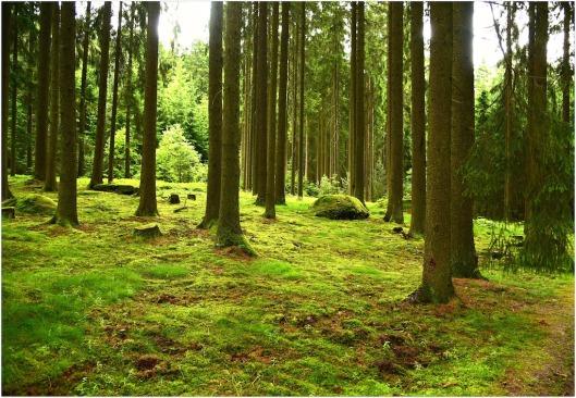 grüner Wald4.jpg