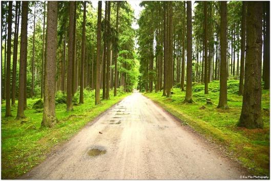 Waldspaziergang9.jpg