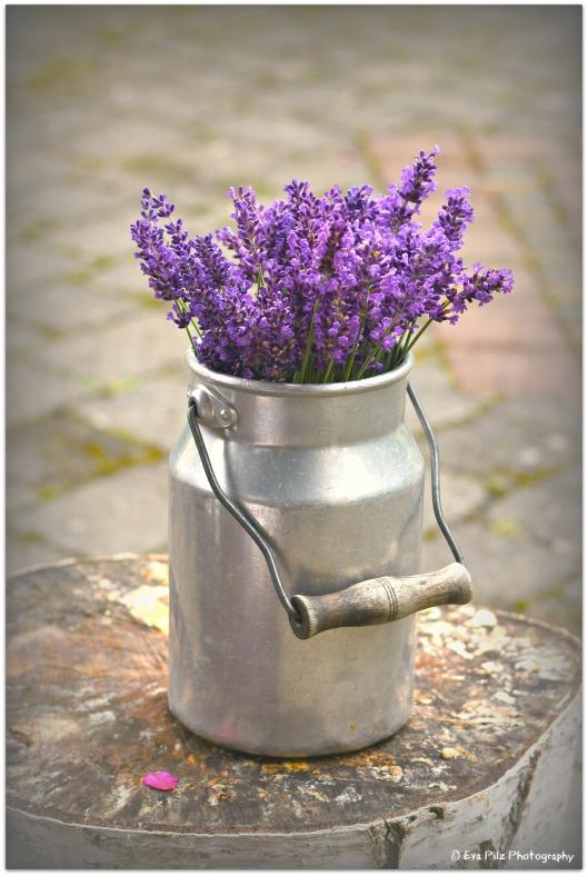 Lavendel in Milchkanne.jpg
