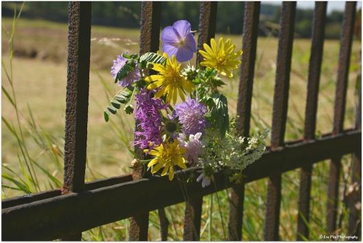 Zaun mit Blumen1.jpg