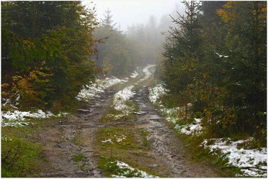 erster Schnee 2016.jpg