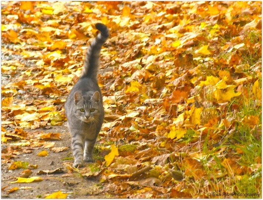 Herbstspaziergang3.jpg