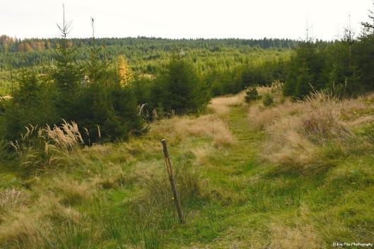 Herbstwanderung3.jpg