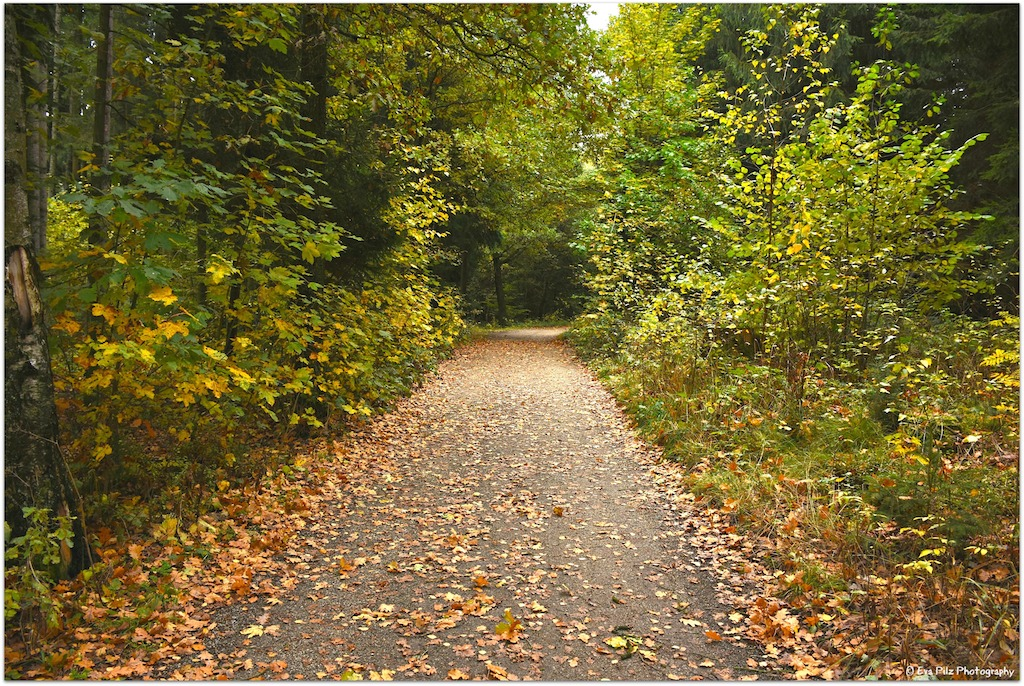 Herbstweg6.jpg