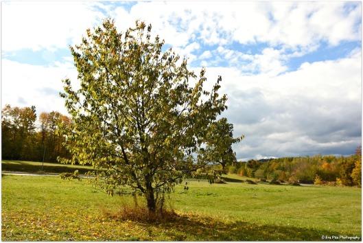 Herbstwiese5.jpg