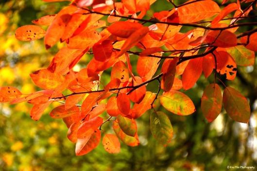 Herz auf Herbstblatt.jpg