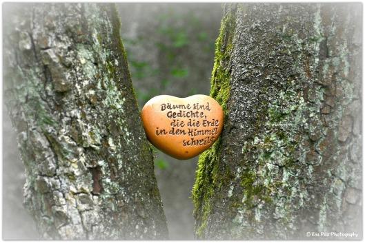 Herz Baum.jpg
