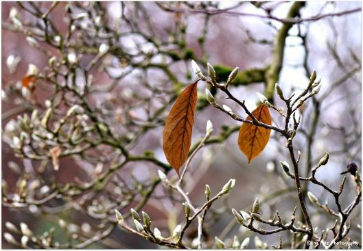 Magnolien im Herbst.jpg