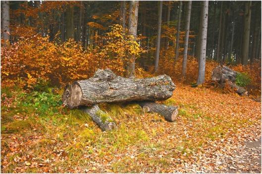 Herbstwald Weitra.jpg