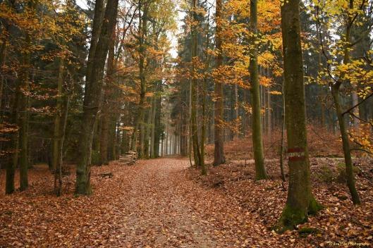 Herbstwald1.jpg