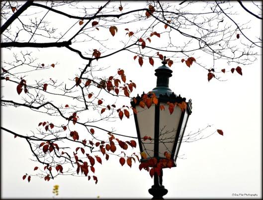 Laterne im Herbst.jpg