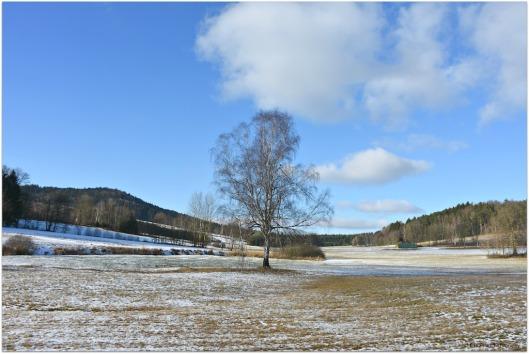 Winterbaum5.jpg