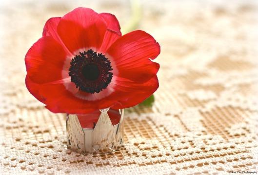 Anemone rot.jpg