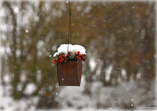 Schneeflocken.jpg