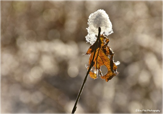 schneehaube