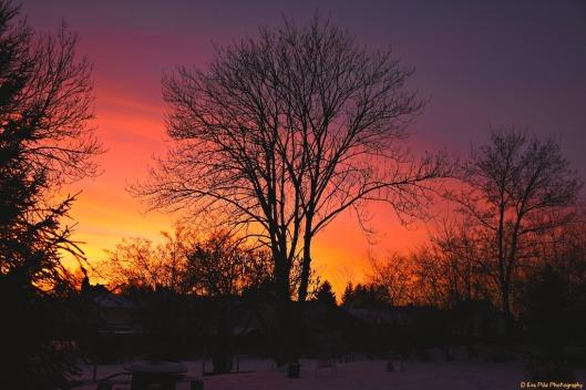 Sonnenuntergang Garten.jpg