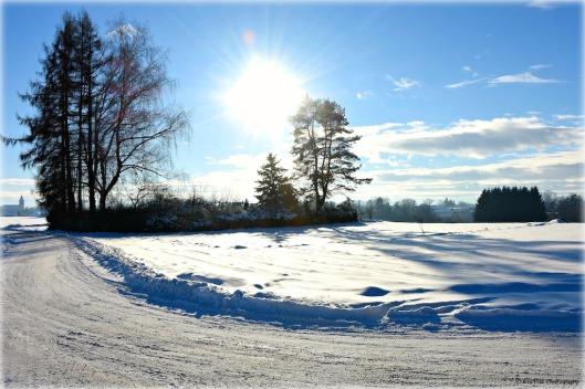 sonniger Wintertag.jpg