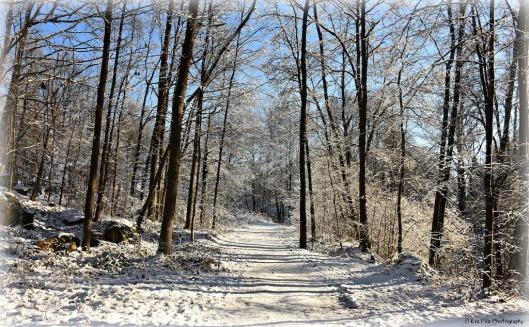 Winterspaziergang3.jpg