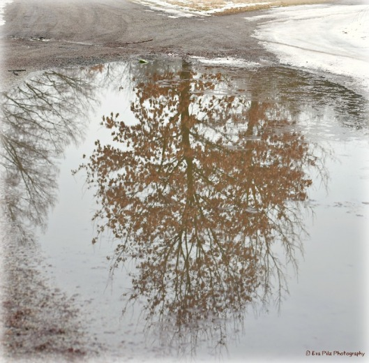 Spiegelung Baum4.jpg