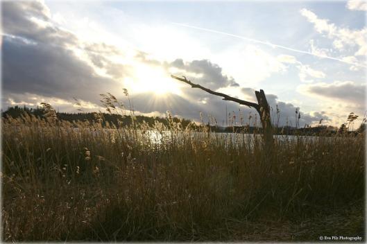 Frauenteich Sonnenuntergang.jpg