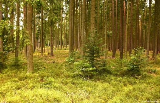 grüner Wald5.jpg