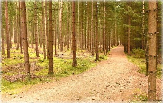 Waldweg H-stein.jpg