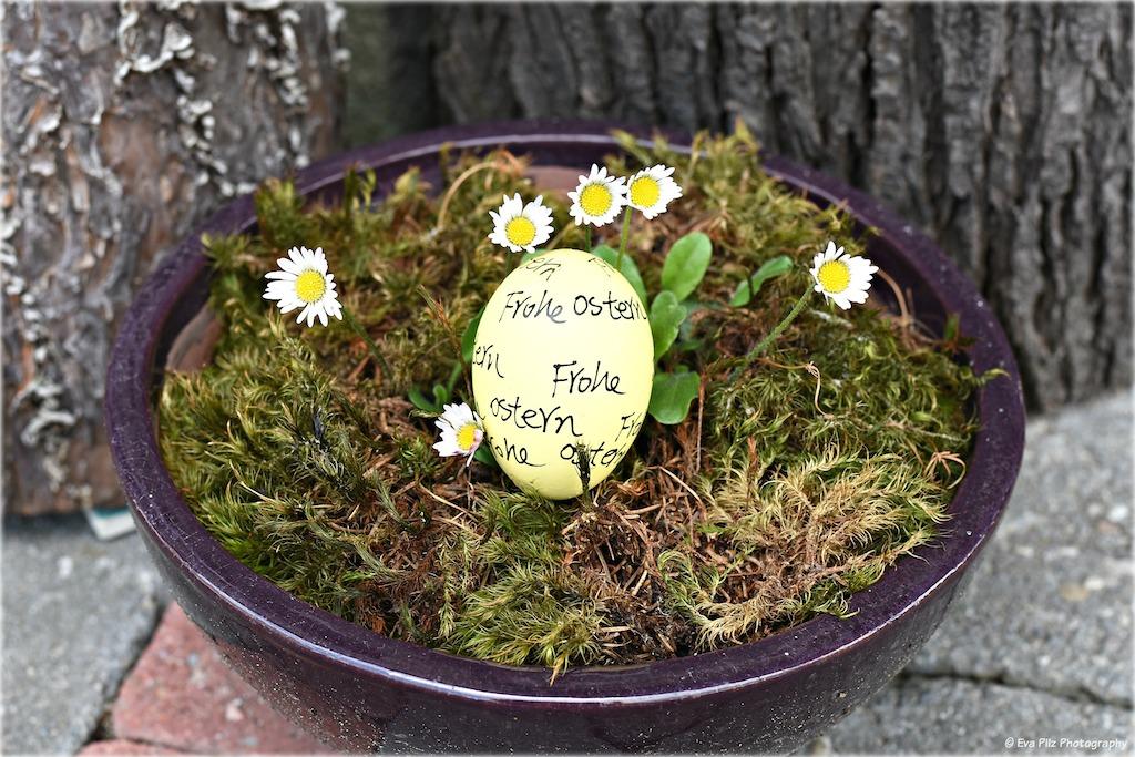 Frohe Ostern mit Gänsebl..jpg