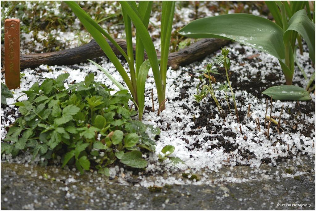 Garten im April.jpg