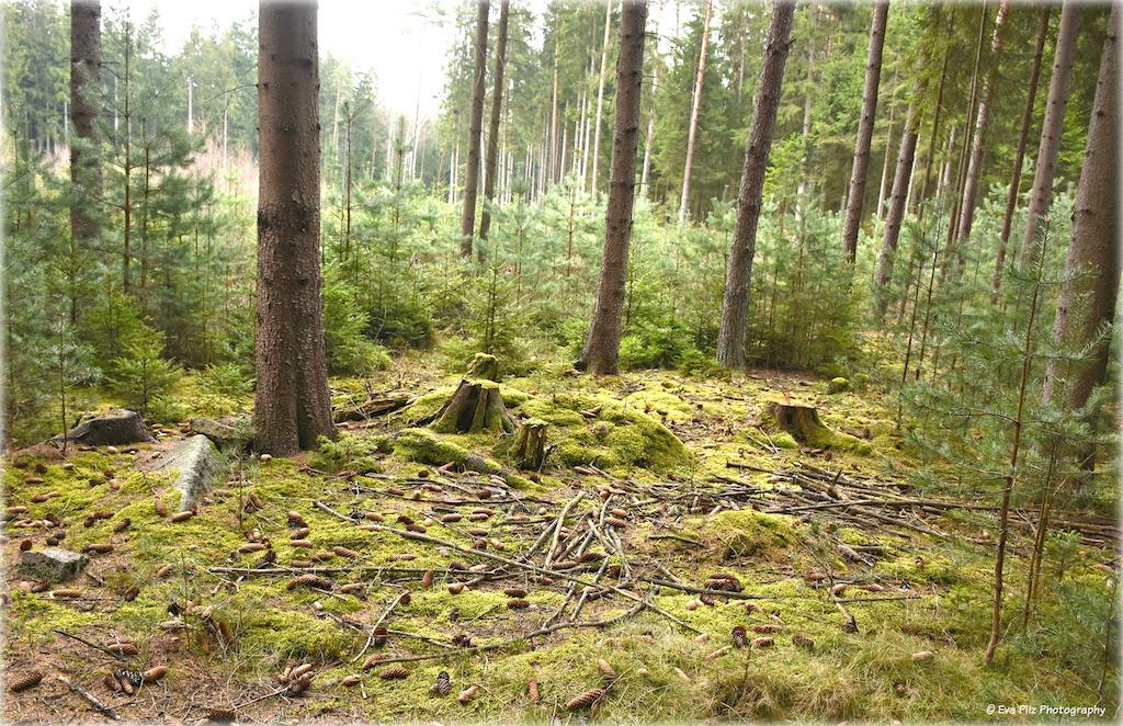Waldsicht2.jpg