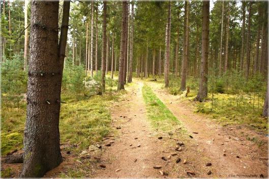 Waldspaziergang Ludwigsthal.jpg