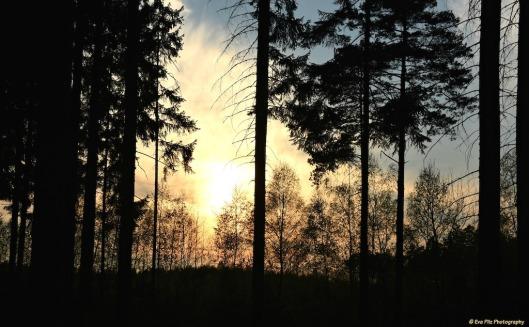 abends im Wald.jpg
