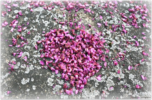Herz aus Judasbaumblüten.jpg
