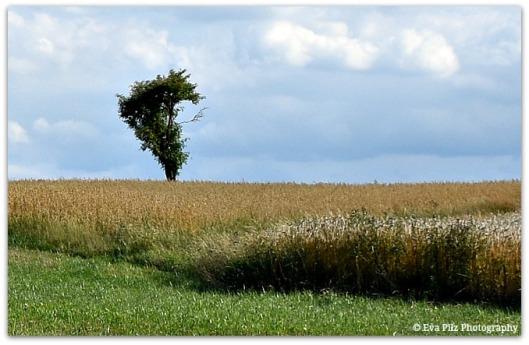 Baum in Herzform.jpg