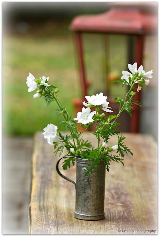 Blumenstrauß Malve