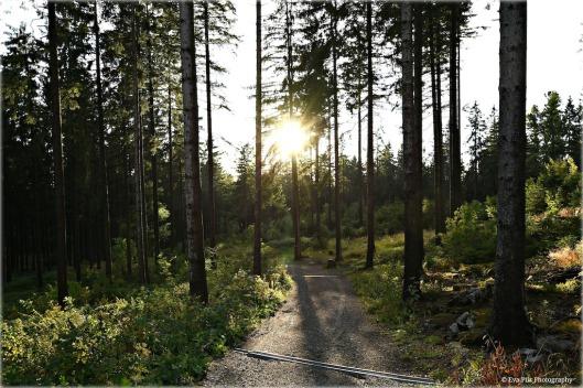 Waldweg im Sonnenschein1.jpg