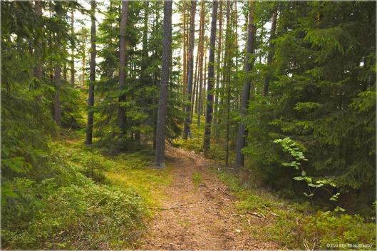 Waldweg11.jpg