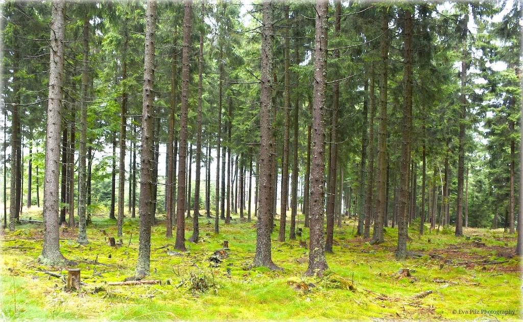 frischer Wald.jpg