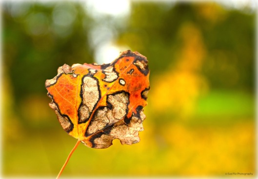 Herbstblatt bunt.jpg