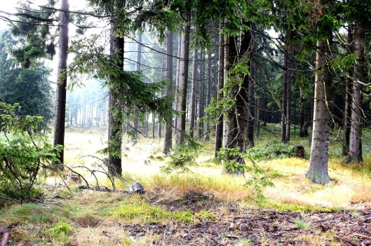 Herbstwald Nebelstein.jpg
