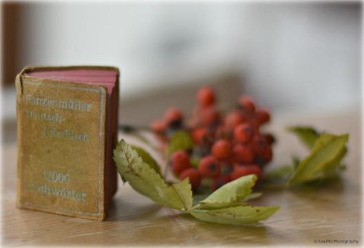Lesen mit Büchern 2.jpg