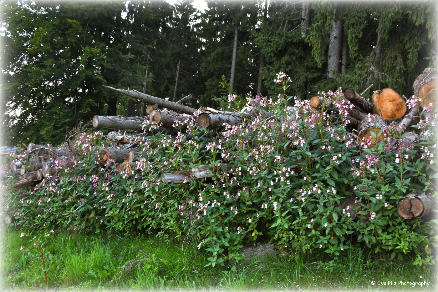 tuxpi.com.1505027610.jpg