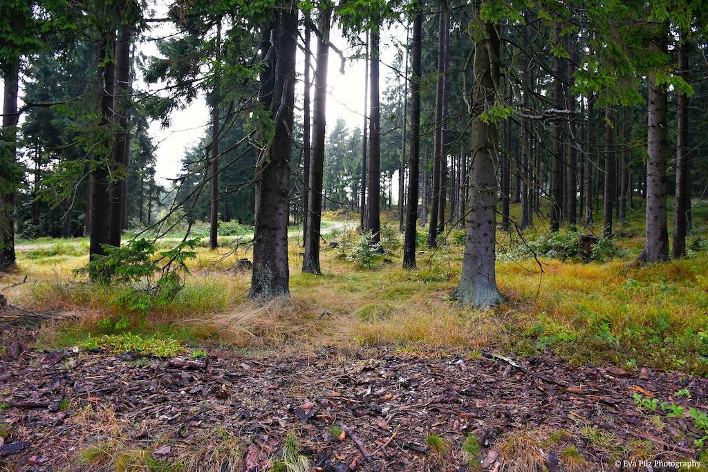 Waldboden2.jpg