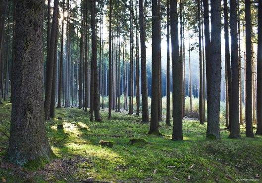 Lichteinfall Wald.jpg