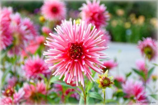 tuxpi.com.1506786574.jpg